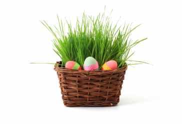 basket-celebration-decoration-easter-41346.jpeg